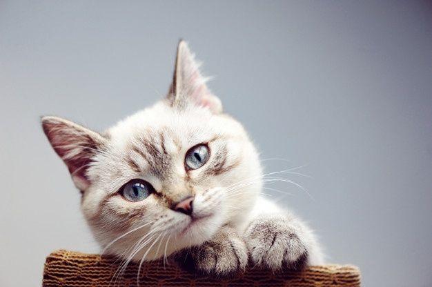 Gros Plan Portrait Portrait D Un Chat Kittens Cutest Cats Adorable Kittens Funny