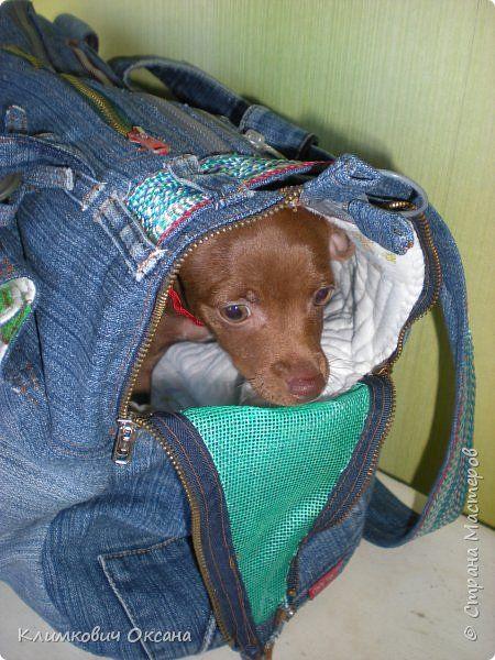 Изделия для питомцев Шитьё Сумка - переноска для собаки Ткань фото 1