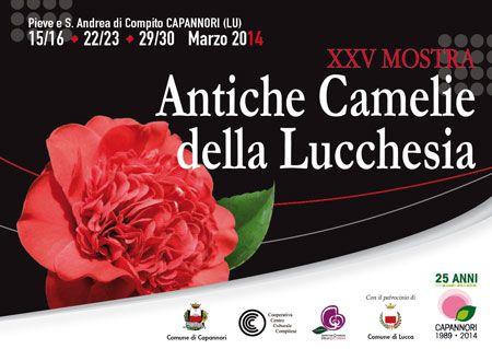 Mostra delle Camelie in Lucchesia  soggiornando al Grand Hotel Tettuccio #mostracamelie #eventimontecatini