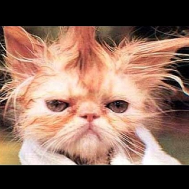 17 Best images about I HATE CATS....!!!!! on Pinterest ... Loathe Cat