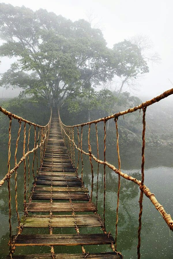Amazing old rope bridge in the jungle forest natural materials design