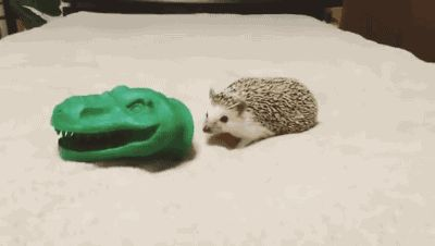 Watch Tyrannosaurus hedgehog Animated Gif Image. Gif4Share is best source of Funny GIFs, Cats GIFs, Dogs GIFs to Share on social networks and chat.