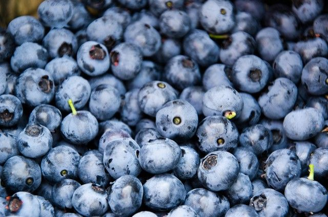 Blaubeeren sind extrem gesund und haben einen tollen Geschmack. Sie haben eine schützende Funktion für das Gehirn, wirken dem Gedächtnisverlust entgegen da sie reich an Antioxidantien sind. Sie sind…