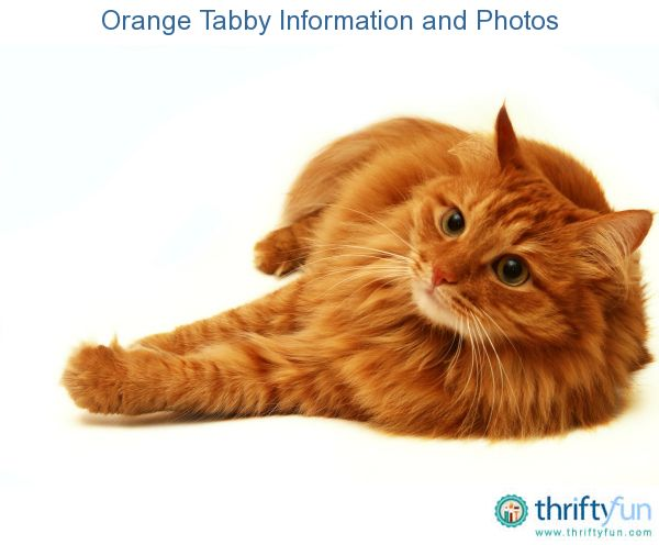 What Kind Of Food Is Good For Urinary Cat Health