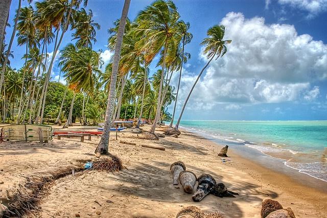 Praia de Peroba, Maragogi, Alagoas, Brazil.