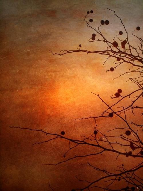 "simpiempimpie: "" Orange Simplicity By: Tara Turner """