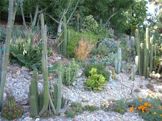 cactus hillside