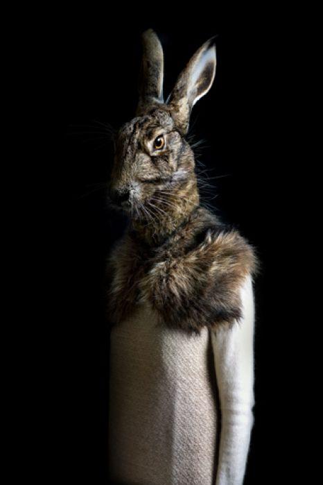 Elegáns állatok|Szeretlek Magyarország
