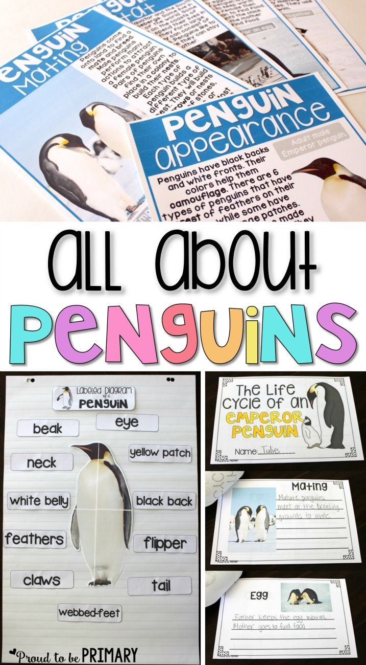 Non-fiction science unit penguin activities for the primary classroom, including a FREE Emperor penguin life cycle mini-book and a book list.