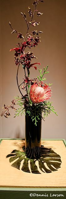 Zen Floral Arrangement .. Queen Protea with Monkey paws and Lycopodium sitting on a tropical leaf....very nice!: