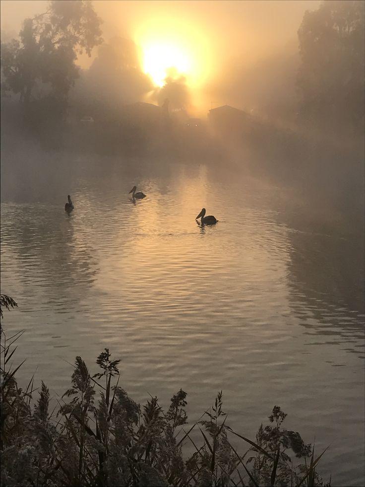 Thanks to Julie Sylvester for sharing her sunrise through the fog #Mildura #Winter #Magic