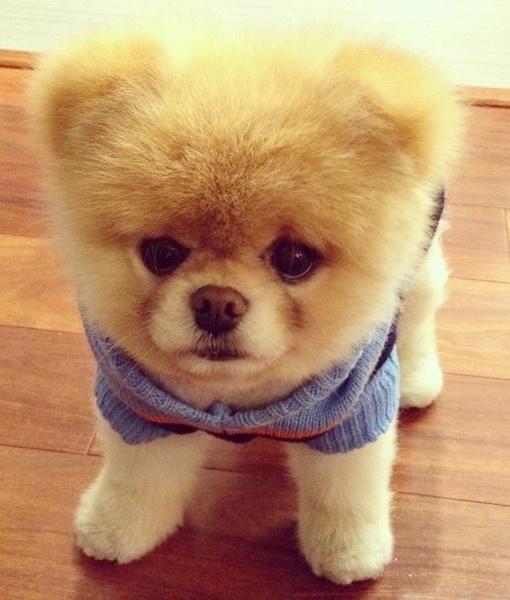 he looks like a stuffed animal...i want another dog...