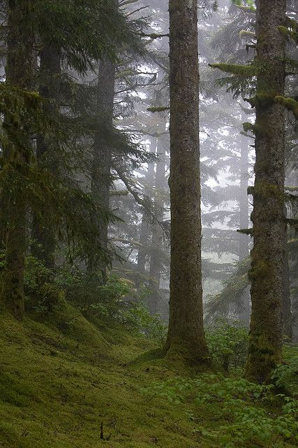 Kodiak - I loved the trees up there like this. Being amongst them was such a peaceful experience.