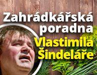 Poradna Vlastimila Šindeláře: rajčata, pryskyřník i lekníny