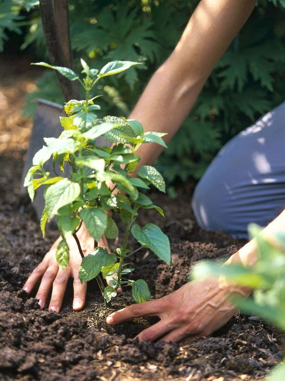 Summer Gardening Tips. Some Like it Hot: Tips for Planting in a