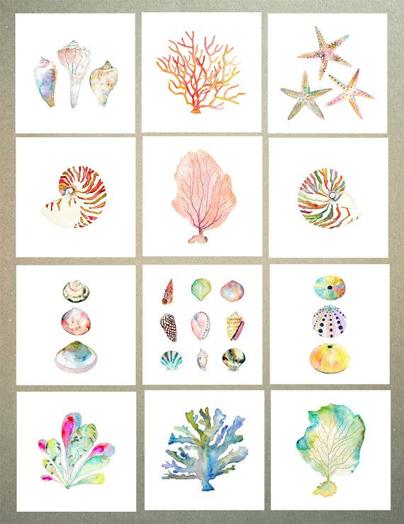 Sea Shell Collection aquarelle Print. Décor de par SnoogsAndWilde