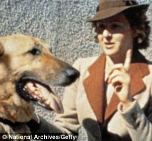 Eva Braun and Blondi, Adolf Hitler's German shepherd. According to Hitler's secretary (Traudl Junge), Eva hated Blondi and was known to kick her under the dining table.