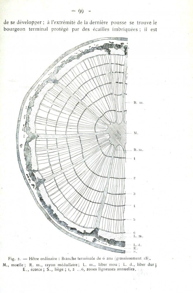 1000  ideas about tree rings on pinterest