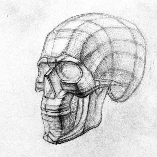 60 отметок «Нравится», 1 комментариев — Художественная Мастерская (@artisthall.ru) в Instagram: «Конструктивный рисунок черепа на наших занятиях.  #рисунок #череп #человек #голова #карандаш…»