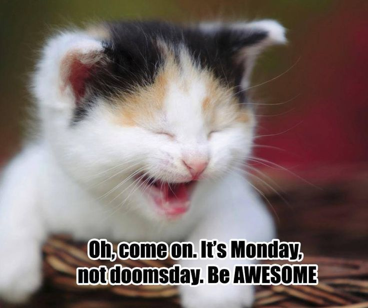 Oh, come on. It's Monday, not doomsday. Be awesome. #ManicMonday #PetPoolWarehouse