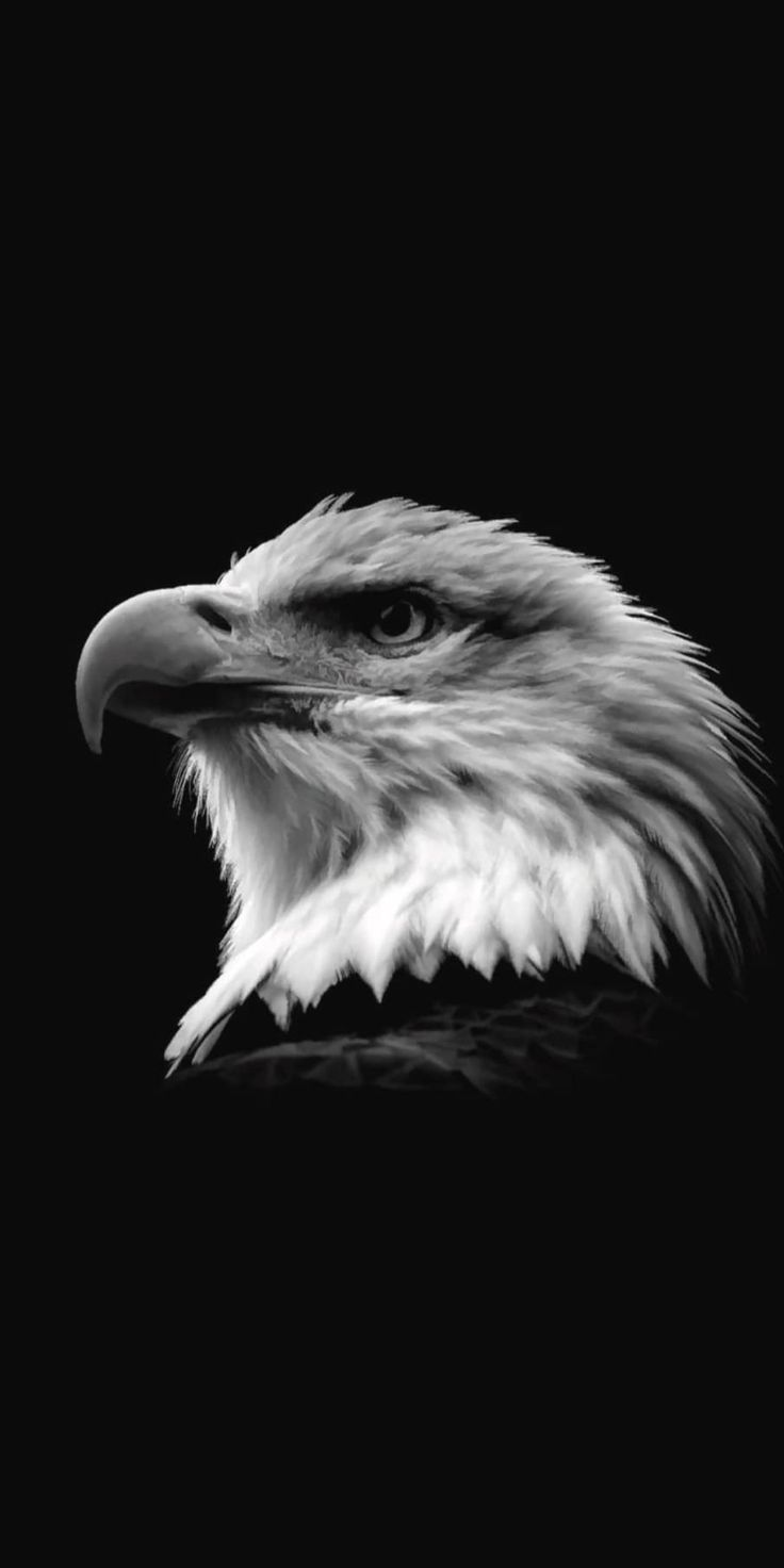 Pin By Mary Thornton On My Phone Wallpapers Eagle Wallpaper Wild Animal Wallpaper Eagle Pictures