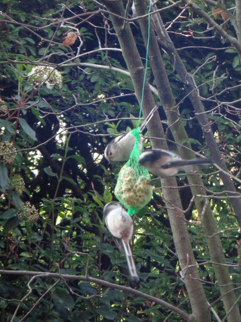 Codibugnoli - https://lefotodiluisella.blogspot.it/2018/02/birdwatching.html
