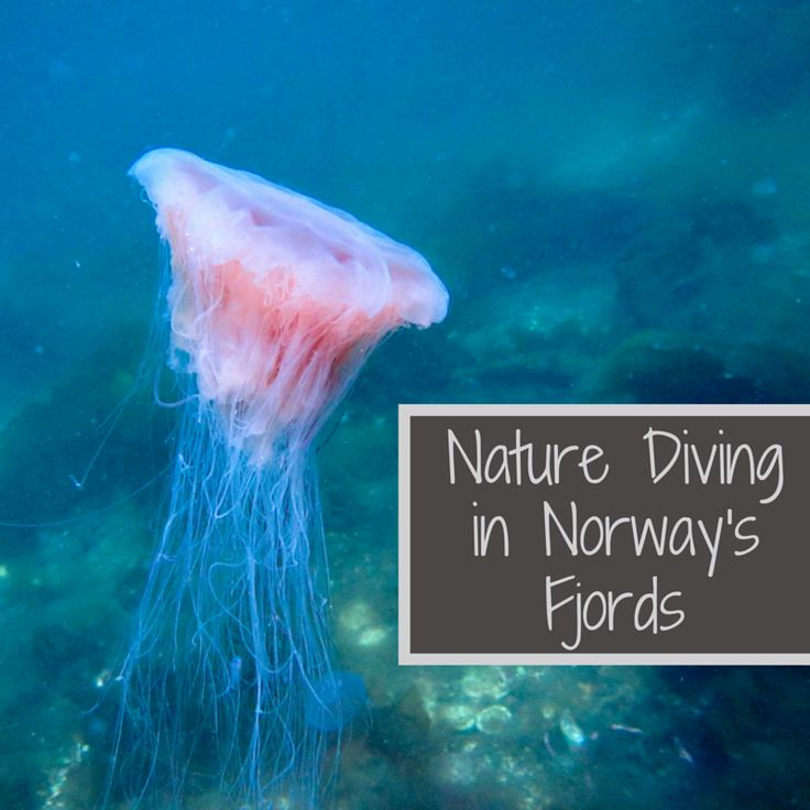 Nature Diving in Fjord Norway — Submerged Oaks