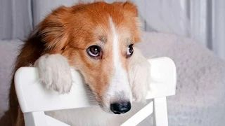 Best Of Funny Guilty Dog Compilation 2014 - YouTube