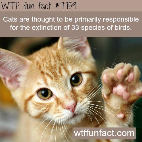 Best 25 Species Of Cats Ideas On Pinterest Species Of