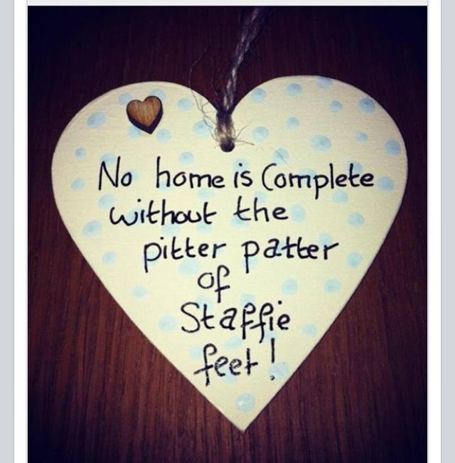 No home is complete without the pitter patter of staffie feet- so true
