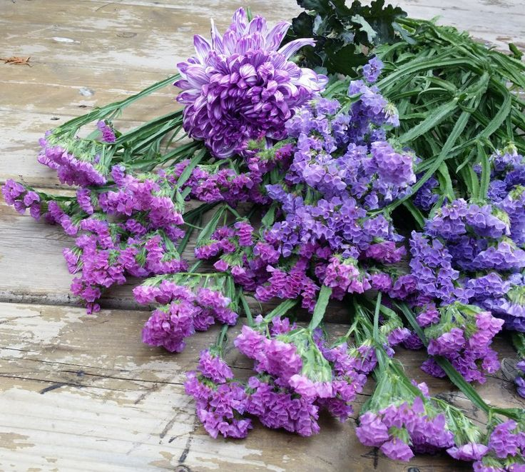 Purple flowers. were making a bouquet for an important event!