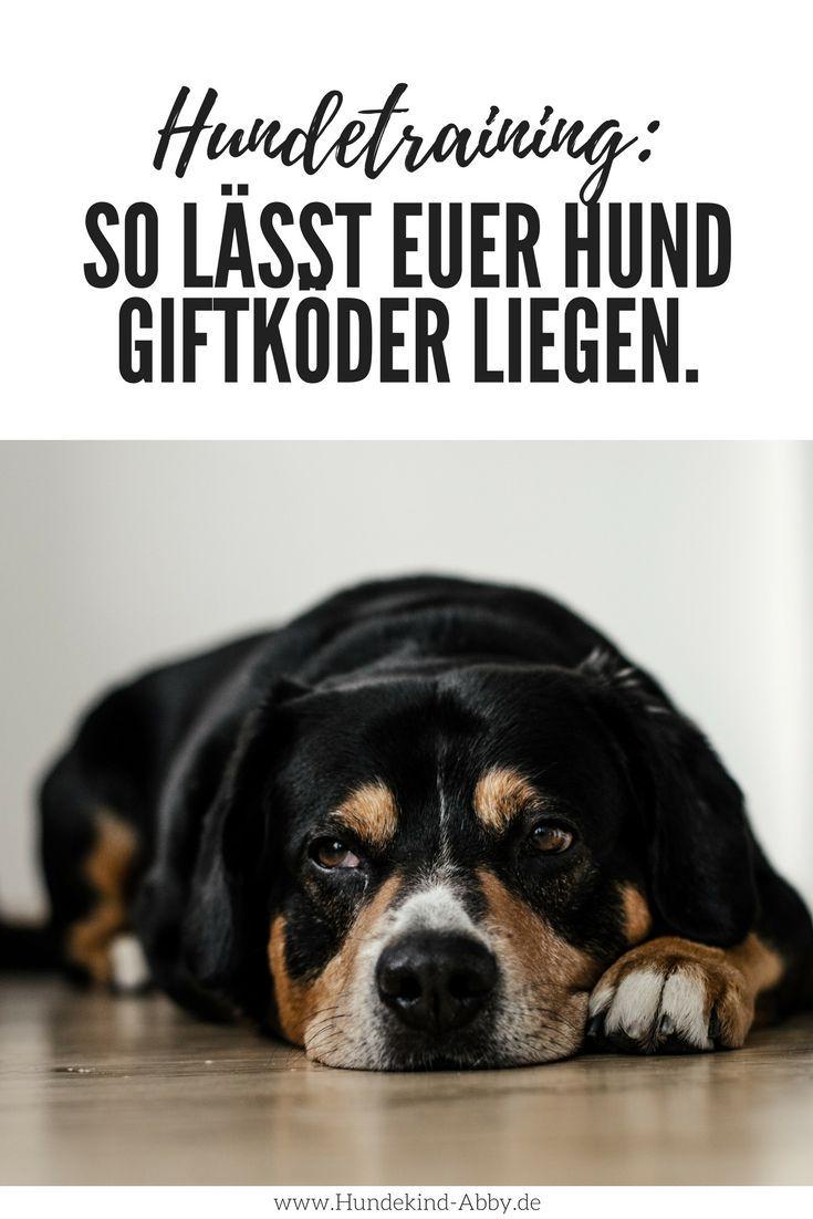 So Lasst Euer Hund Jeden Giftkoder Liegen Werbung Hundekind Abby Hundeblog Hunde Hundchen Training Hunde Erziehen
