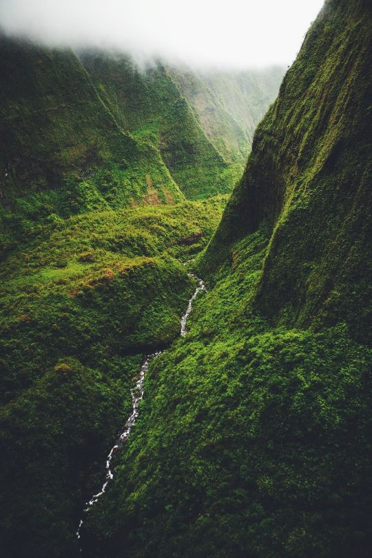 Ponderation — expressions-of-nature:   by roelruijs Kauai,...