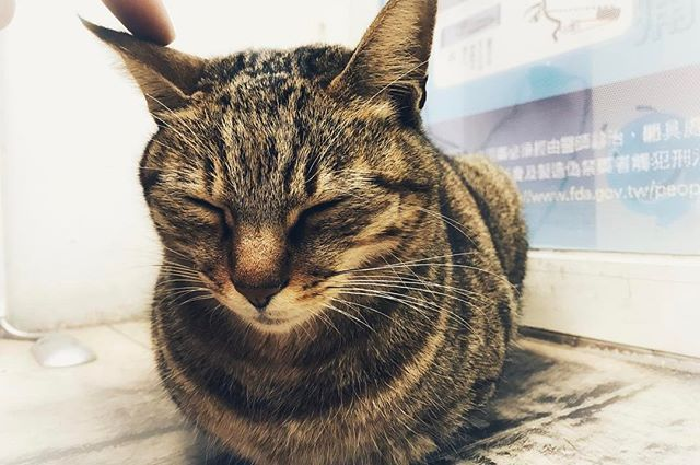 #taiwan  #taiwantrip  #taiwantravel  #taiwanlife  #cat #lovecat #lovecats #catphoto #catphotos #猫love  #愛猫  #台灣 #台湾 #台湾旅行  #台湾行きたい  #台湾人  #台湾台中  #台中 #台中景點  #台中一日遊  #iphone #iphone7photo #iphone7photos #iphone7photography #iphone7plus