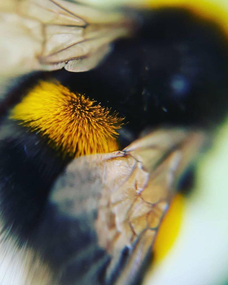 Neuer Tag neue Experimente…..was man nicht alles im Garten findet 🌾🌱🐝🌱🌾 #insekt #insect #insekten #insectlovers