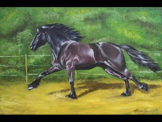 Üdvözöllek!     A nevem Sándor Gyöngyi.     Gyerek korom óta rajzolok, festek. Imádom a természetet, az állatokat (főleg a lovakat).   Vi...