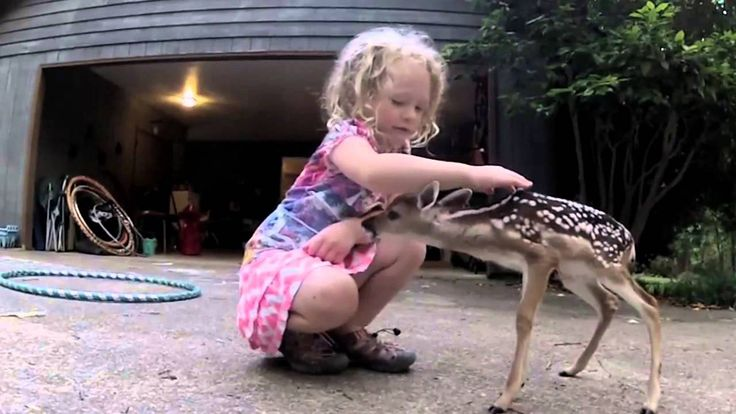The Deer Whisperer