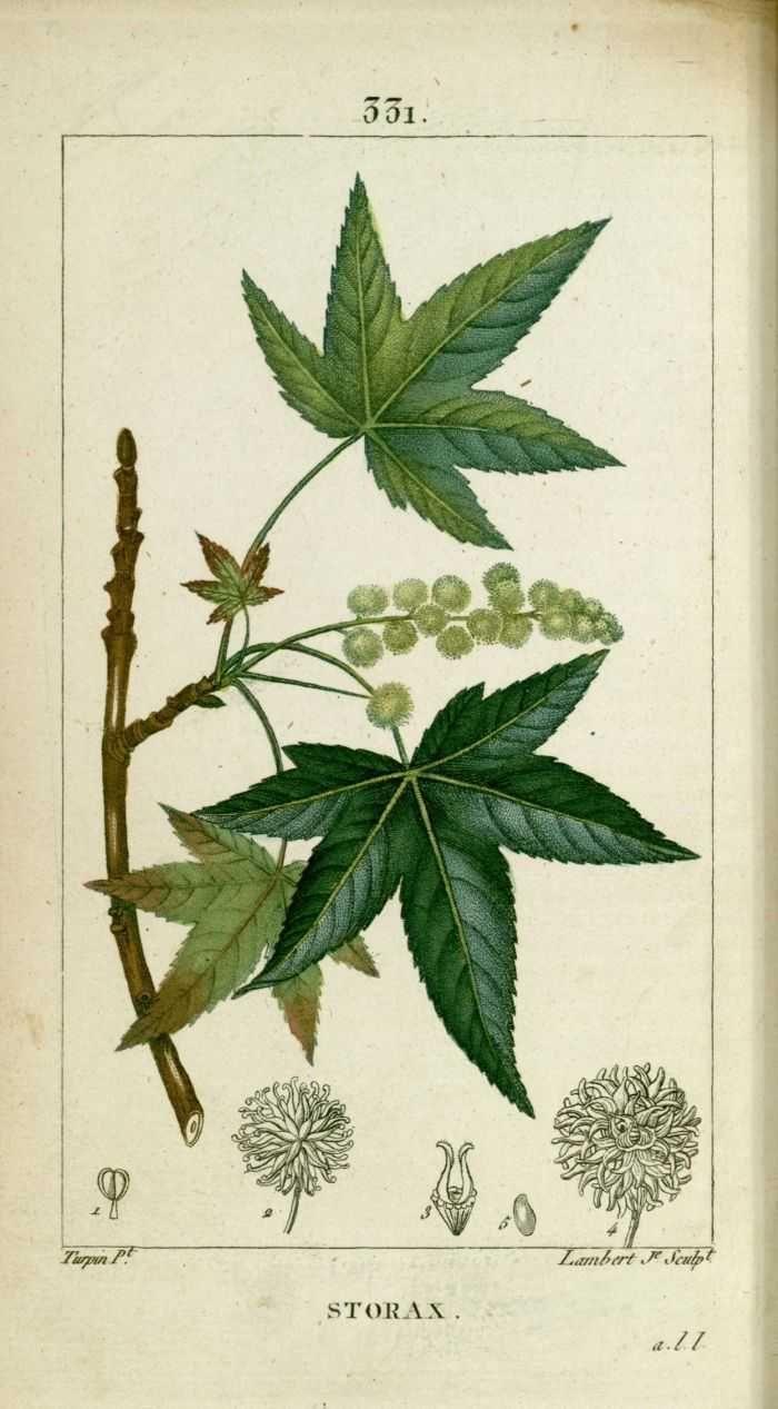 """ANCIENNES FLORE MÉDICALE TIRES DE """" FLORE MÉDICALE """" : CHAUMETON , CHAMBERET - PARIS 1816.........."""