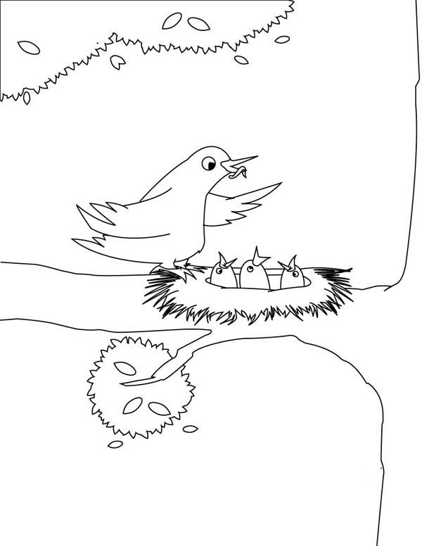 Robin Robin Bird Feeding Her Babies Coloring Page