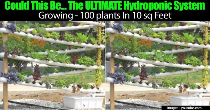 Hydroponics are quickly gaining traction as a viable way to grow plants and food faster. Virtually any type of plant can grow in this environment, which is what is leading many people to adopt it as opposed to traditional gardening. Some of the hydroponic equipment can be super... #spr #sum
