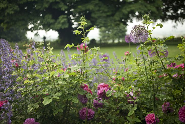 charlotte-fidler-gardenista-2-photo-jim-powell