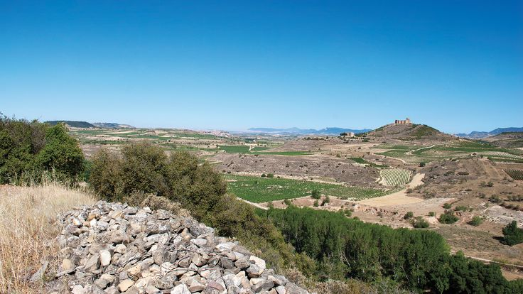 Scores and tasting notes for red wines from Spain's Rioja, Priorat, Calatayud, Montsant, Vinos de Madrid and Yecla reviewed by Wine Spectator executive editor Thomas Matthews.