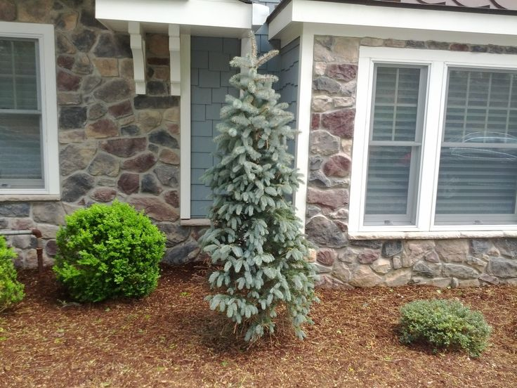 Tall narrow garden designs plants pinterest for Tall thin trees for small gardens