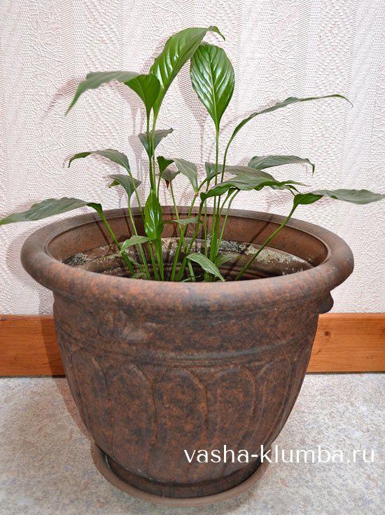 Что нужно знать при покупке горшка для комнатных растений,  как сделать правильный выбор диаметра, высоты, материала изготовления