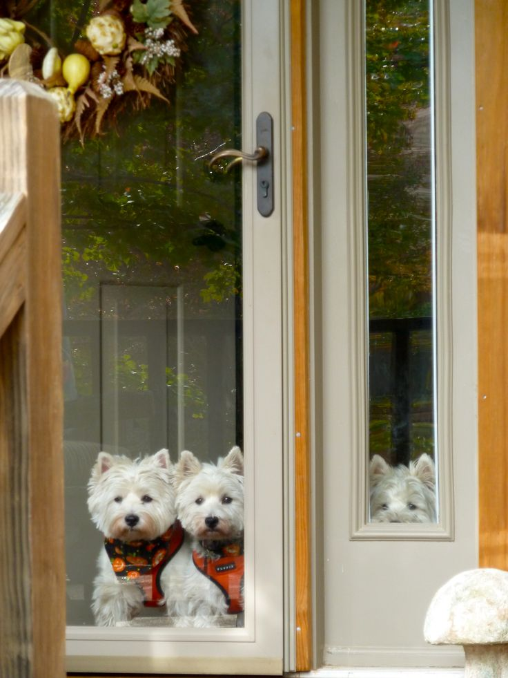 i love the one on the right peeking through the window! :D
