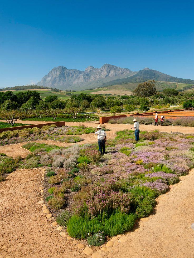 Fabulous farm hotel! Babylonstoren Hotel, Cape Winelands, South Africa