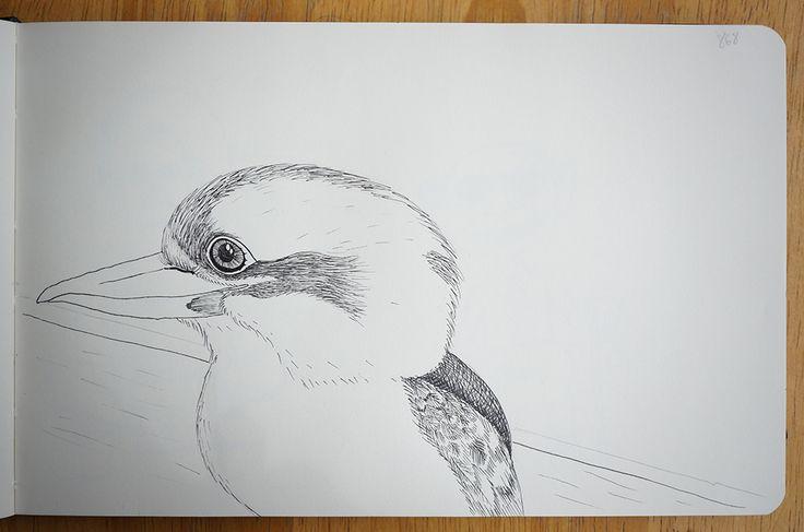kookaburra - Portraits in landscape
