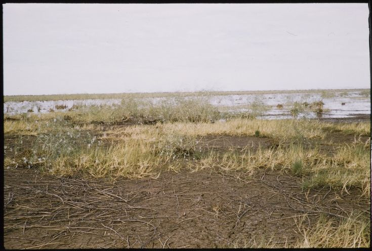 082161PD: Swamp and rare blue flowers, Cherrabun Station, ca. 1955 https://encore.slwa.wa.gov.au/iii/encore/record/C__Rb3522060