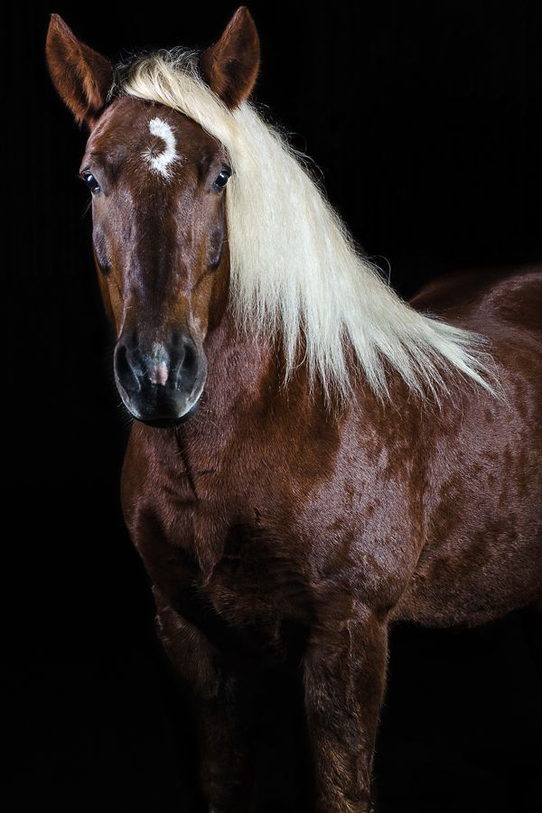 Equine Photography - The most beautiful horse photography.