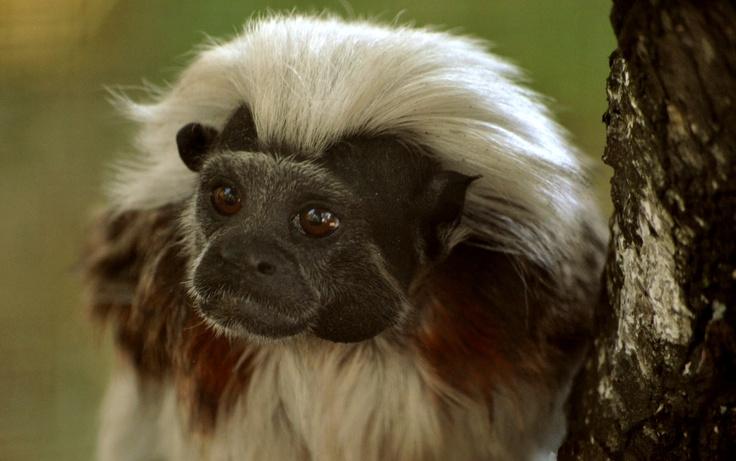 little monkey ~~